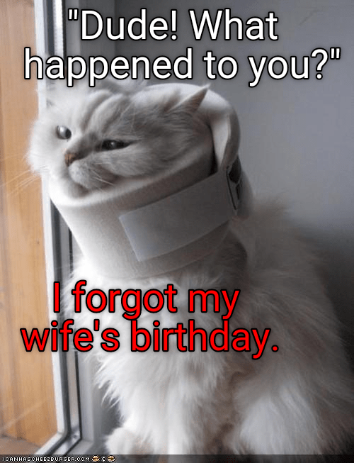 Cat Who Forgot Wife S Birthday With Neck Brace On Happy Birthday Memes Know Your Meme