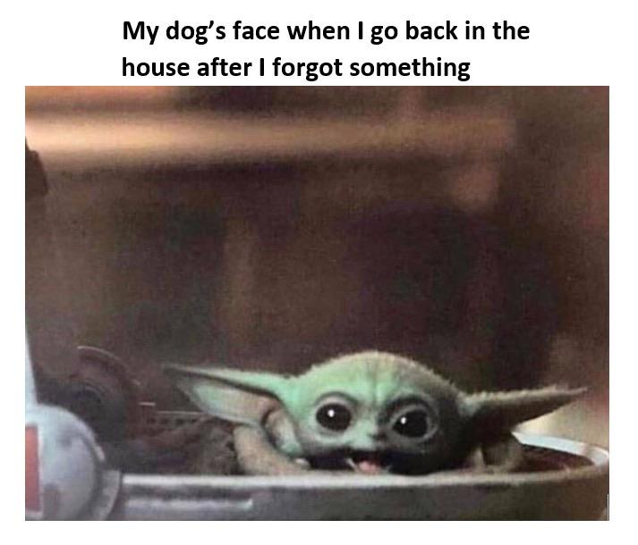 33 Of The Best Baby Yoda Memes Because Obviously He S The Real