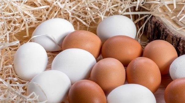 Slikovni rezultat za yumurta resmi