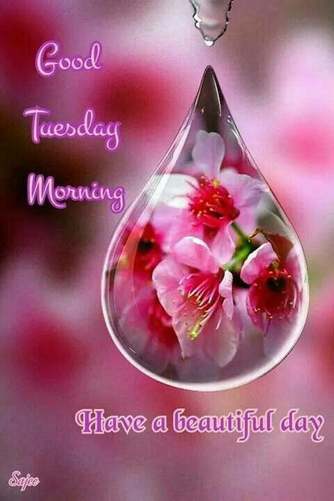 Good Tuesday Morning Have A Beautiful Day Tuesday