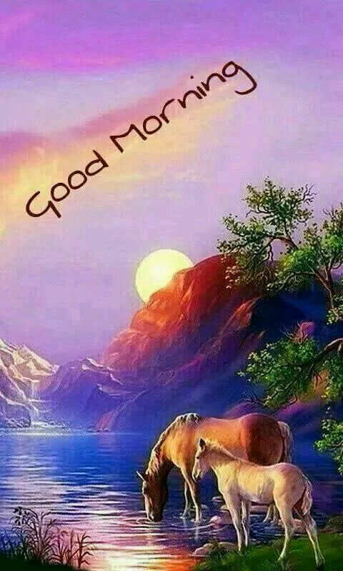 Good Morning Hello