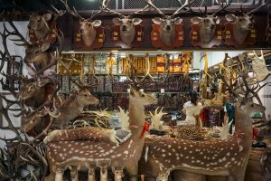 Traditional Chinese medicine and fauna