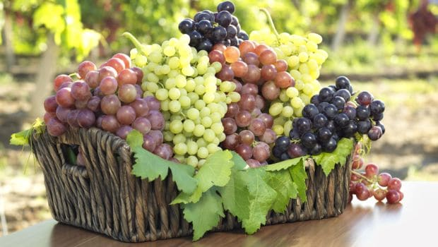 The Different Types of Grapes for Eating & Making Wine - NDTV Food