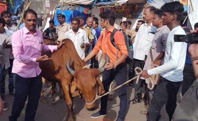 cow fears of gau rakshaks mumbai