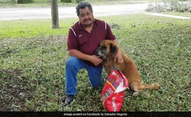A Photo Of A Dog Carrying A Bag Of Food After A Storm Hit Texas Went Viral - Here's His Story