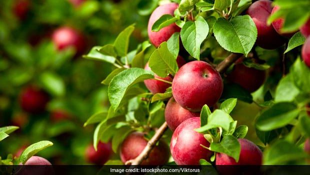 5 Most Popular Fruit Bearing Trees And Their Benefits Ndtv Food