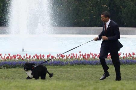 """""""सच्चा दोस्त और वफादार साथी खो गया"""": पूर्व अमेरिकी राष्ट्रपति बराक ओबामा का कुत्ता 'बो' मर गया"""