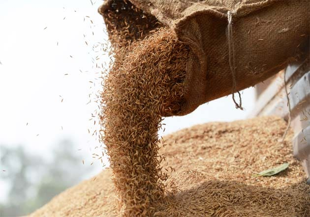 Government Has Given 48 LMT Of Food Grains To States Under Pandemic-Related Scheme