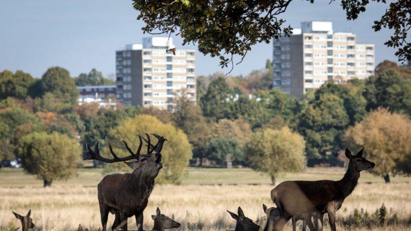 美加現「狂鹿癥」可能傳染人 勿食感染動物肉 | 瘋牛癥 | 新唐人中文電視臺在線