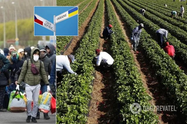 Чехия оказалась на грани катастрофы без украинских заробитчан