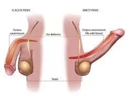 Erectile Dysfunction Solution in Nigeria