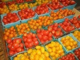 8 Varieties and Types of Tomatoes Grown In Nigeria