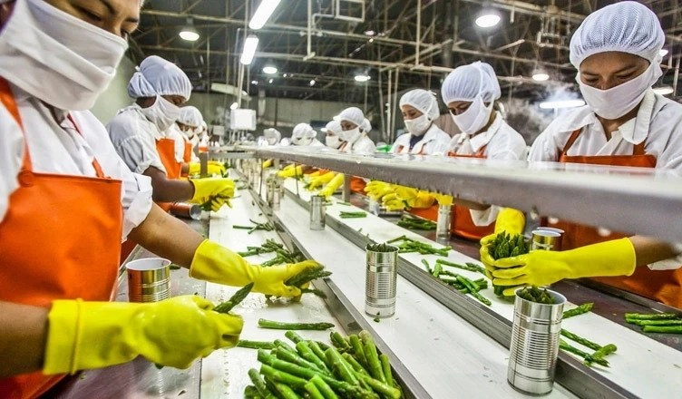 How To Start Food Processing Business In Nigeria