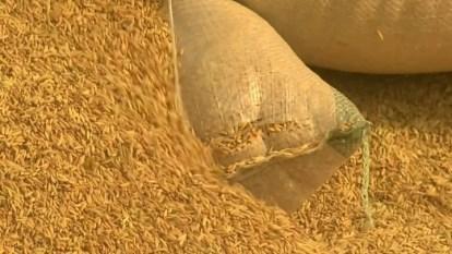 Annual Rice Consumption in Nigeria