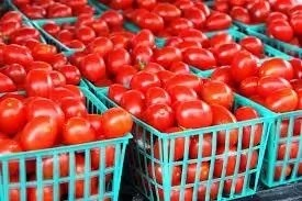 6 Problems of Tomatoes Production in Nigeria