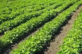 9 Economic Values of Crops Cultivated in Ilorin