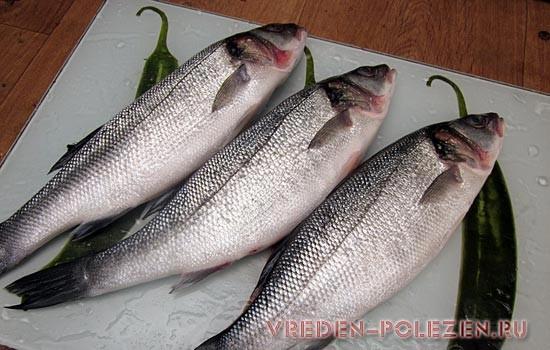 Какая рыба полезнее для здоровья человека? Жареная рыба