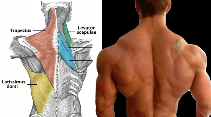 5 Must Do Back Moves to Build A Massive Back