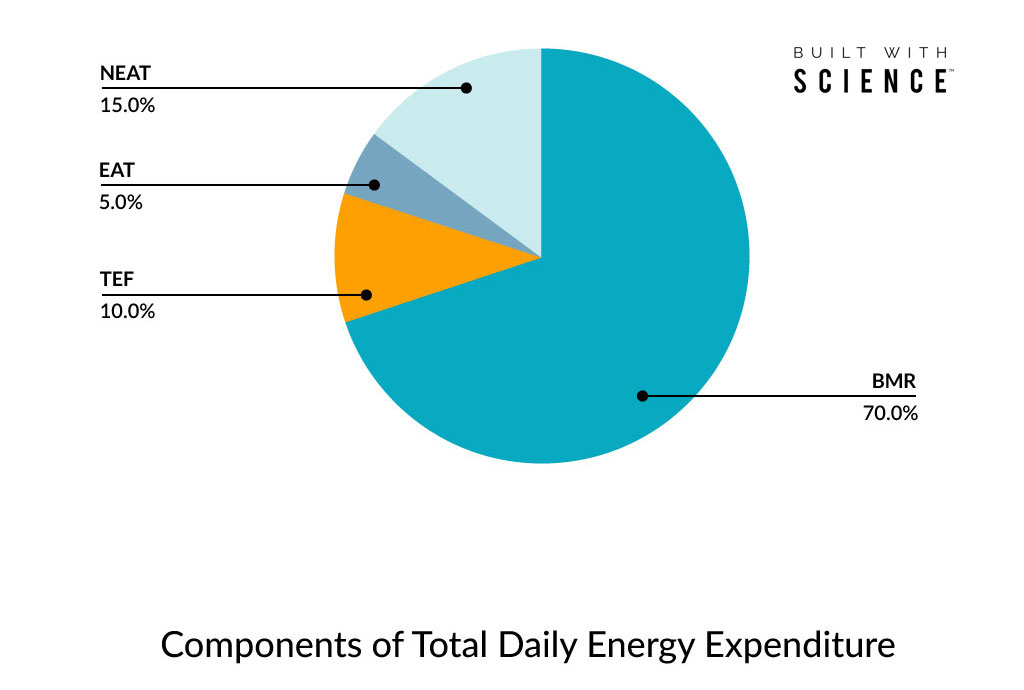 TDEE 101: How Many Energy Ought to I Eat?