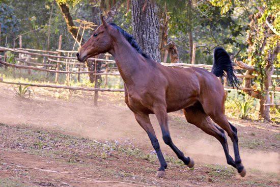 Plateau stables - Zomba Plateau