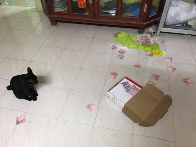 kucing hitam dengan kotak berisi duit