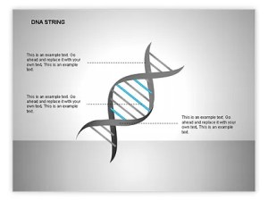 DNA Strand Diagrams for PowerPoint Presentations, Download