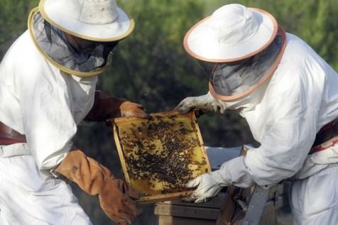 Dos colmeneros de la zona de Talavera muestran un panal de abejas con miel.  R. M.
