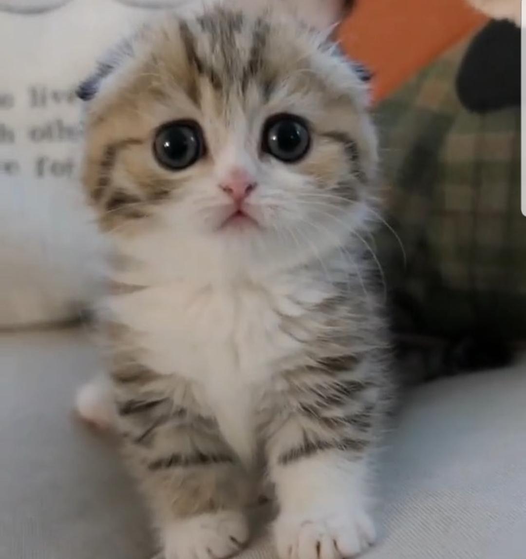 Kitten Mittens Kittens