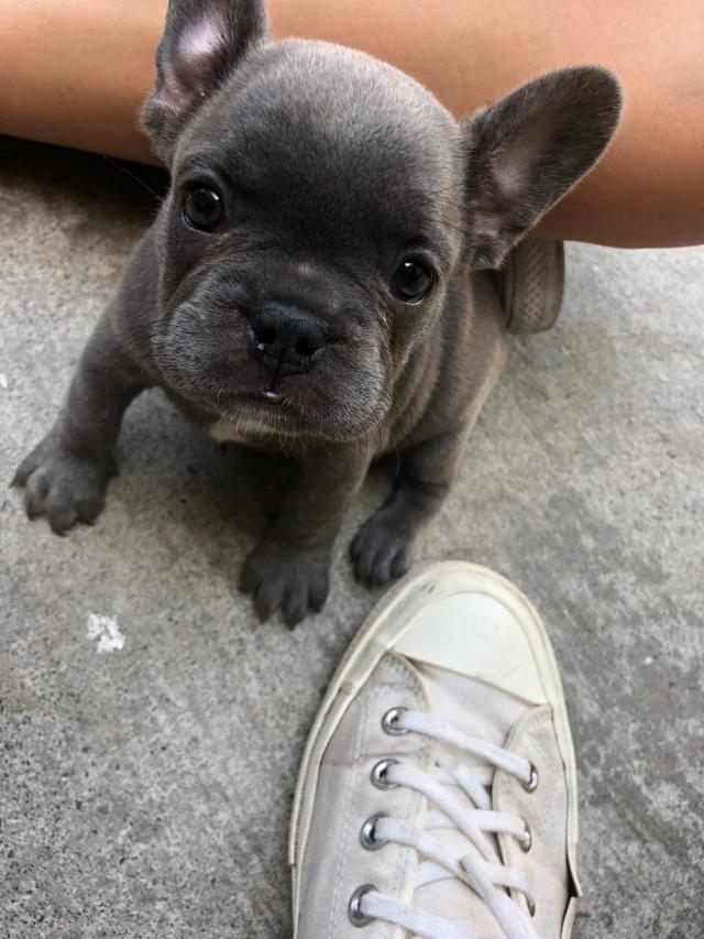 name my french bulldog puppy** :) shes is 6 weeks old and we