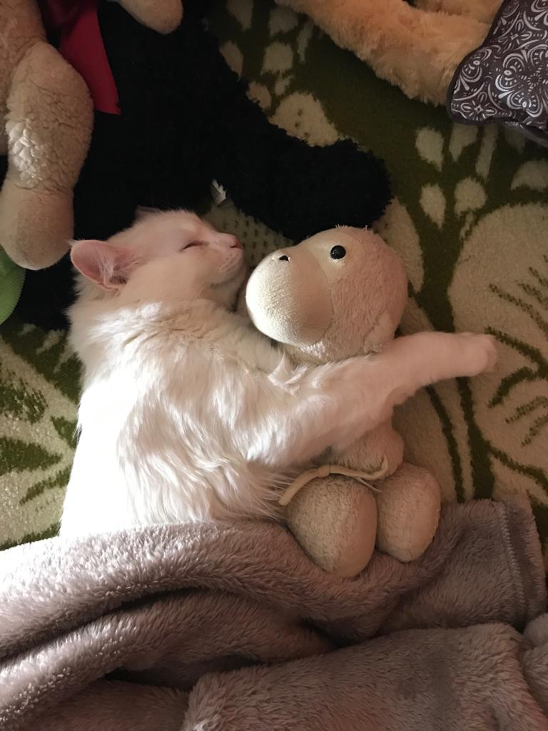This Cute Photo Of My Cat Hugging A Teddy Bear Is For Marcia And