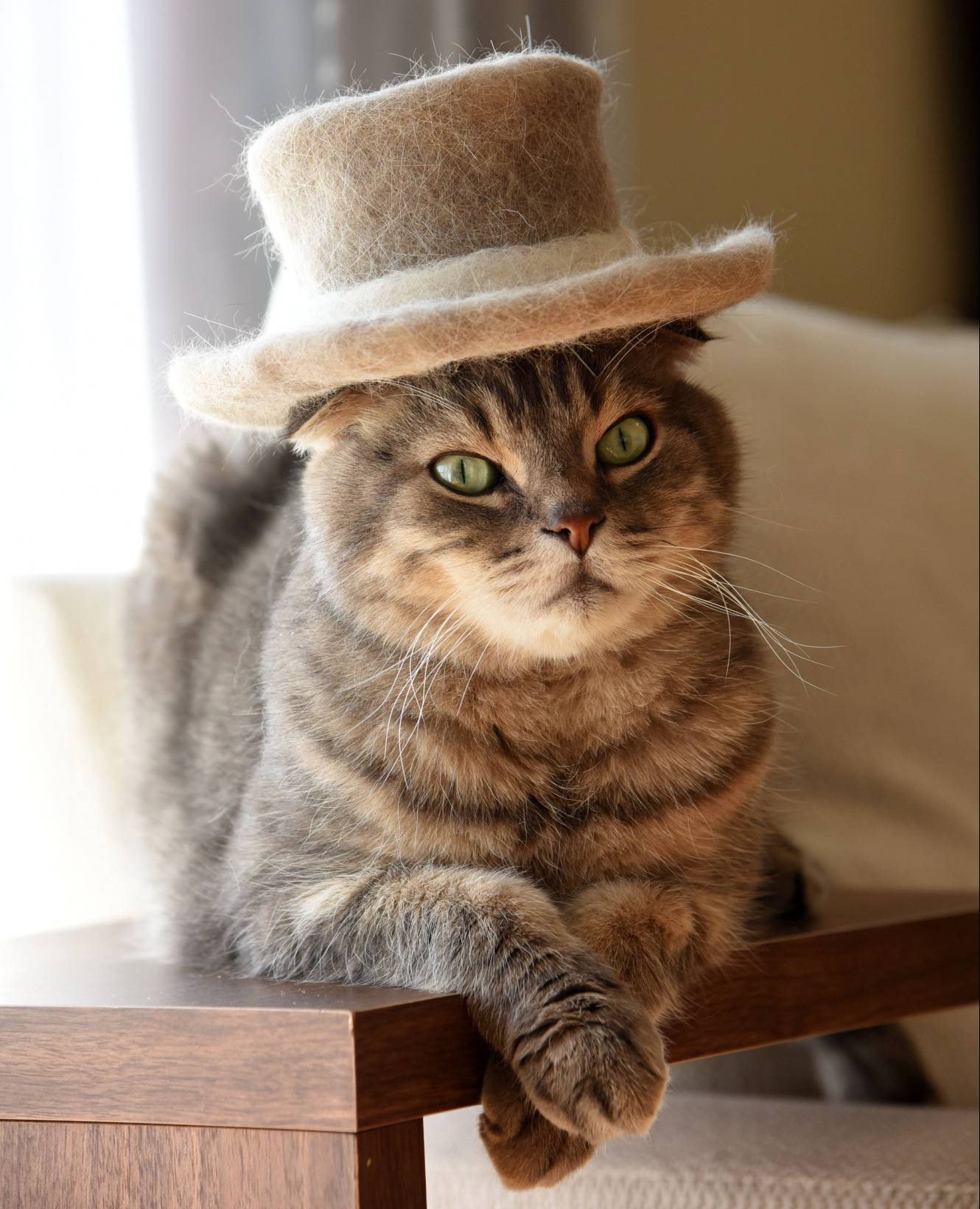 This Cat With A Hat Aww