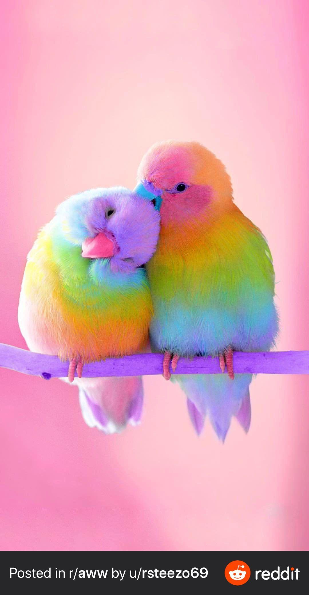 Rainbow Love Birds Rainboweverything