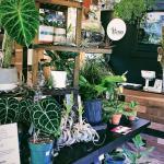 Found A Plant Shop W Cool Rare Plants Illexotics In Philly Pa You Can Shop Online Www Illexotics Com Got My Monstera Albo Variegata Aglaonema Pictum Tricolor There Those Are Super Rare But