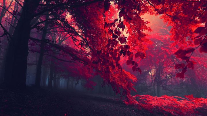 [1920 X 1080] Red Forest wallpaper