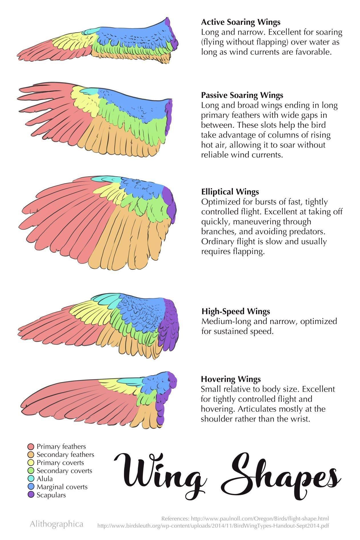 The Different Types Of Wing Shapes For Birds And What Kind