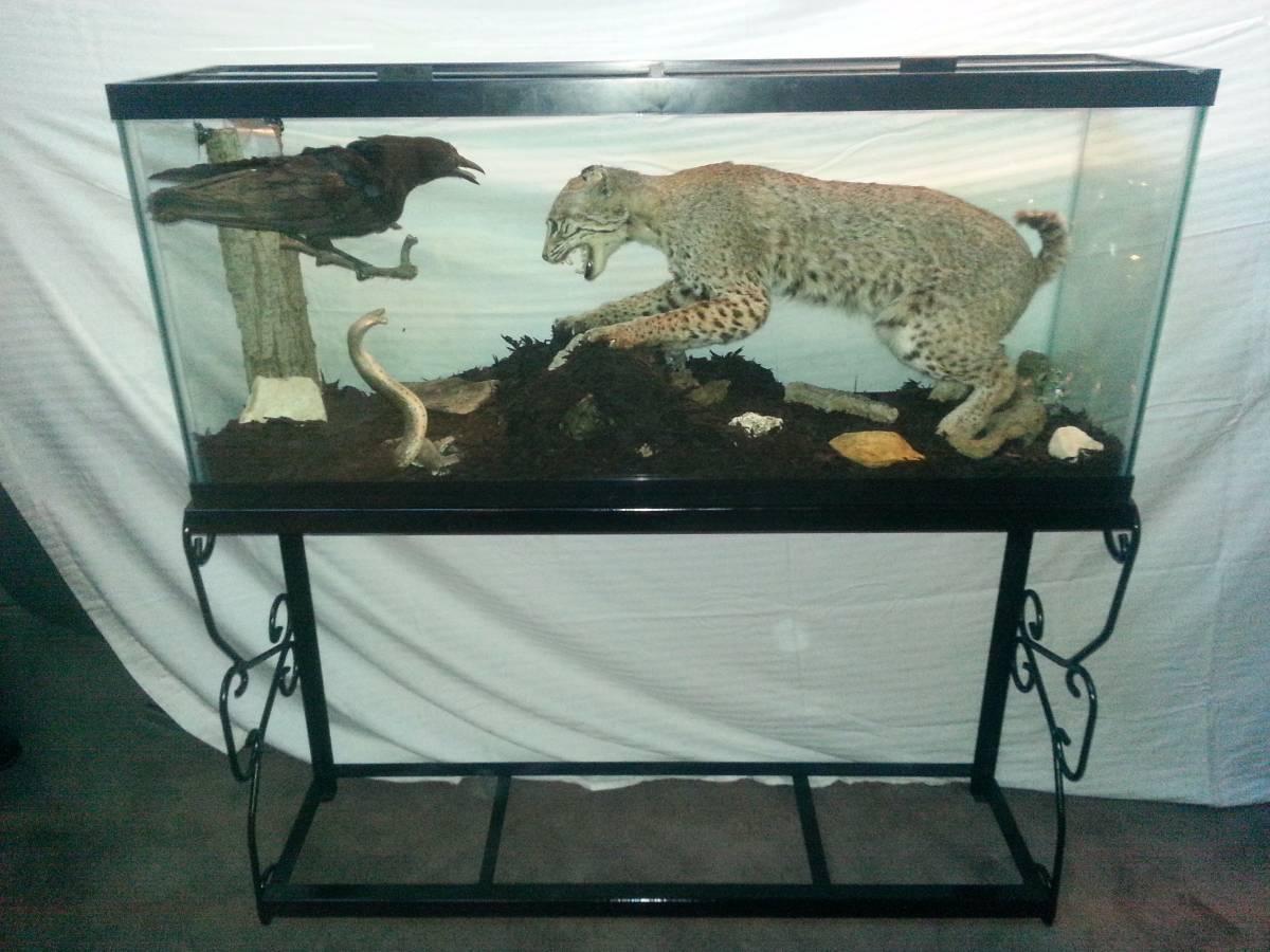 200 Gallon Fish Tank For Sale Craigslist | Unixpaint