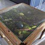 I Made A Coffee Table And Put A Moss Garden In It Terrariums