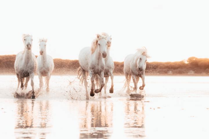 Wild horses (Photo credit to James Everitt) [4884 x 3256]