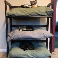 Three old pillows plus a bookshelf. Instant cat bunk beds