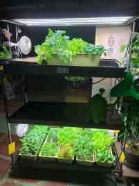 Made Myself A Mobile Two Tier Indoor Organic Vegetable Garden For The Apartment Gardening