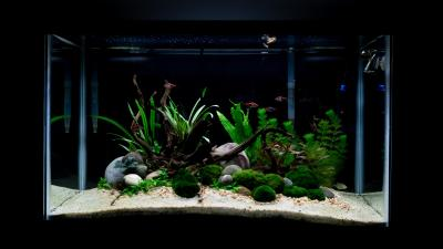 29 gallon island aquascape: 1 week after planting : Aquariums