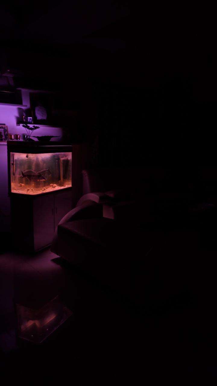 Do fishes like purple?