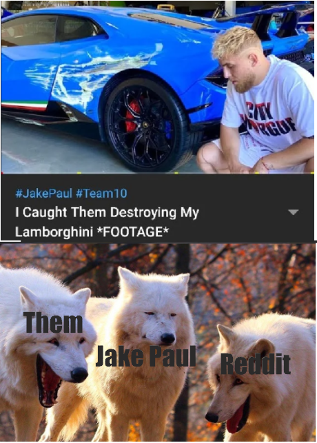 Two Out Of Three Wolves Laughing Memetemplatesofficial