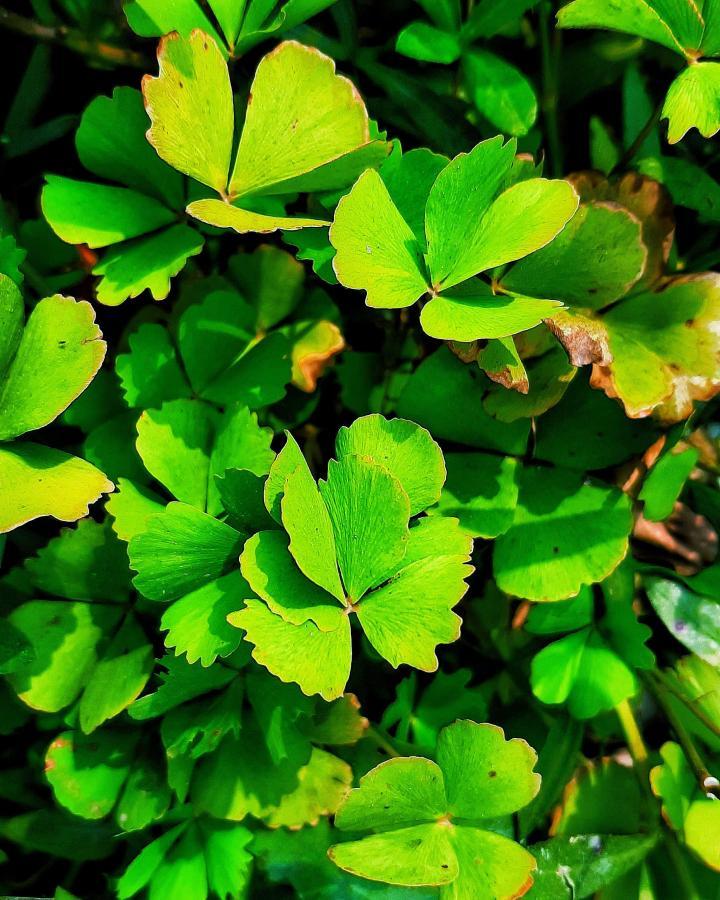 Susni flower