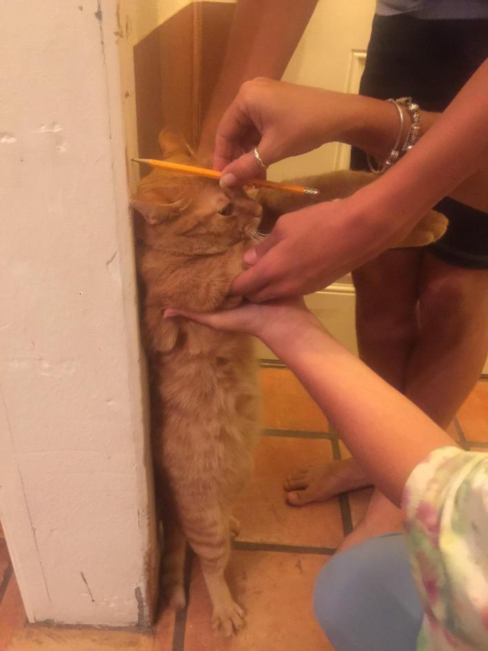 Weird Things that Owners Do to their Pets