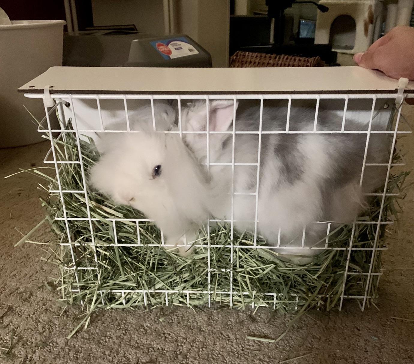 found her stuck in her new hay feeder