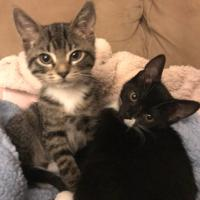 """Jerry and Elaine after screaming me awake at 5 am because their blanket fell off the couch in the other room. I set their cozy bed back up and get this look. """"Okay, you can go now."""""""