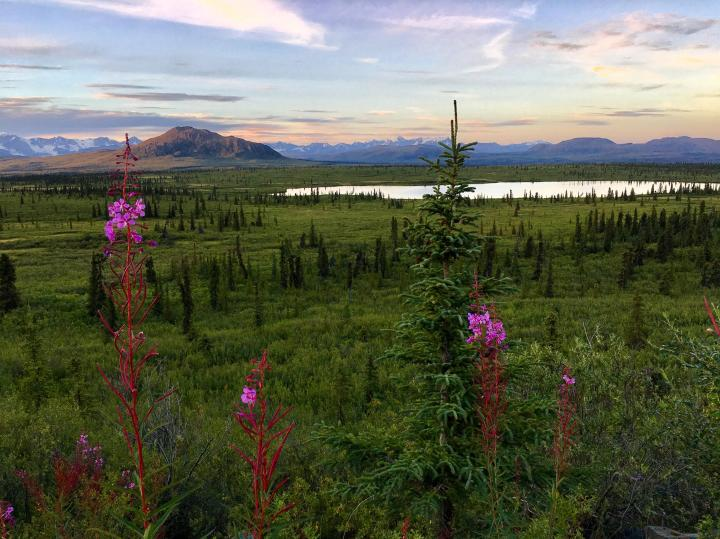 The interior of Alaska at the end of summer. Source: Reddit