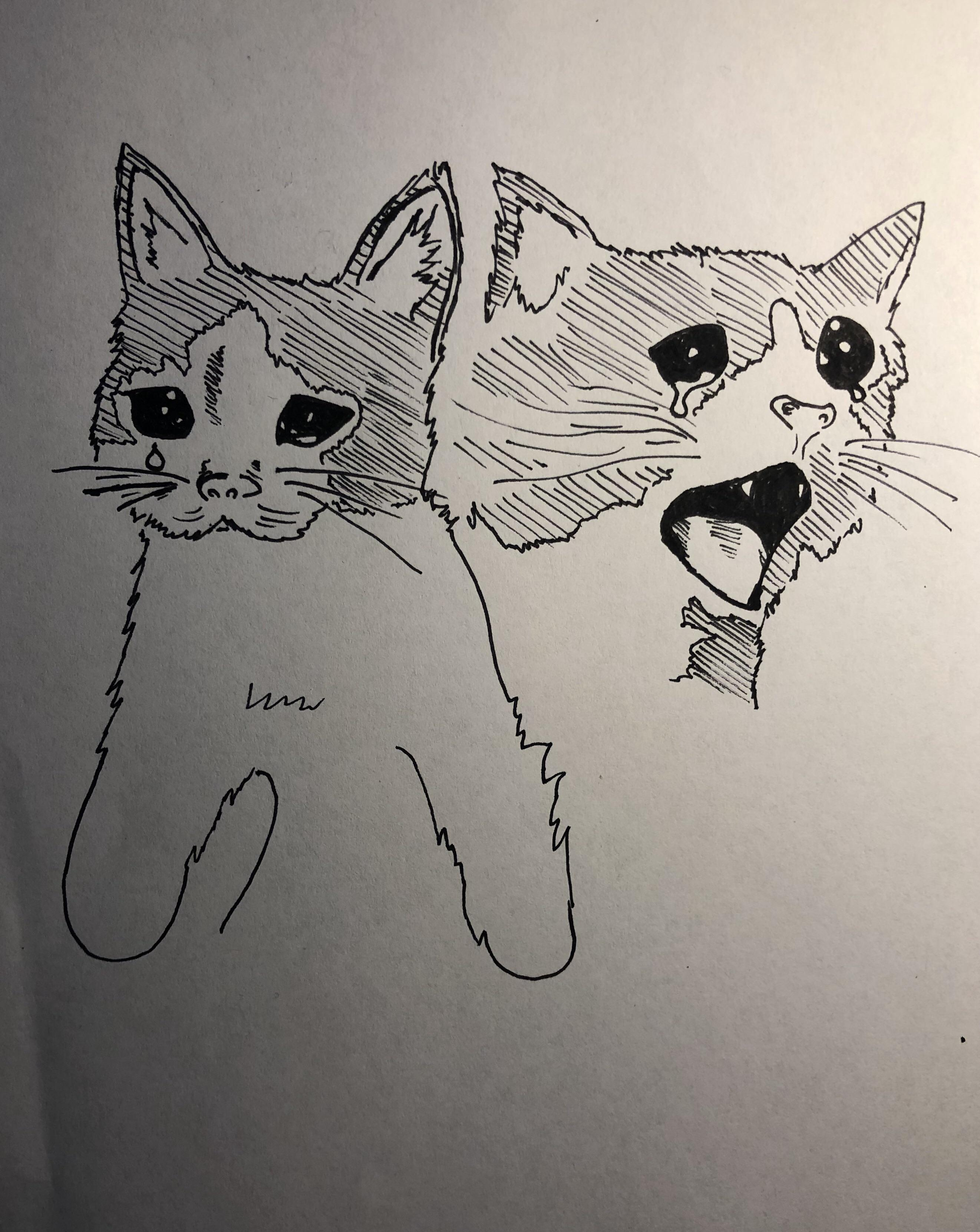 Crying Girls And Cat Blank Template Imgflip