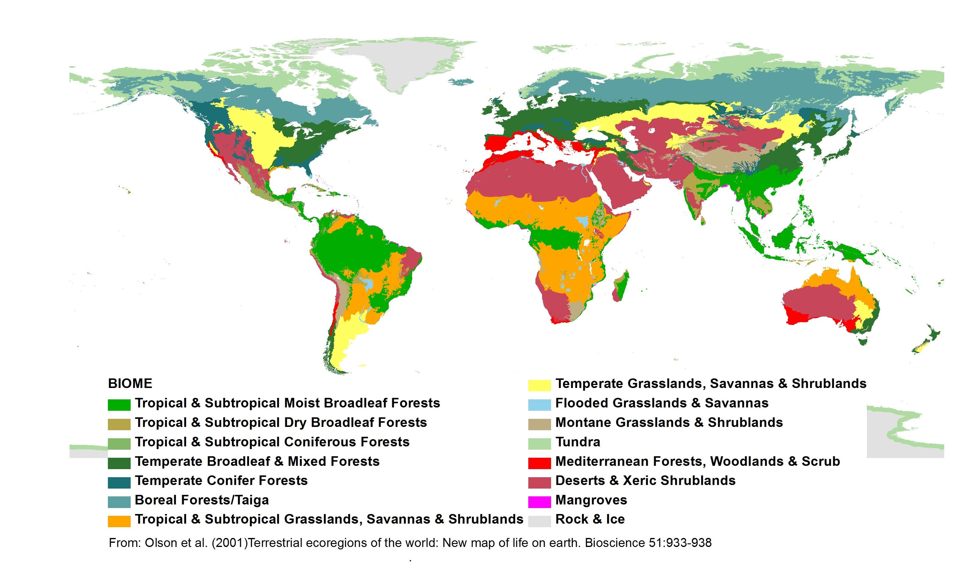 Terrestrial Ecoregions Of The World New Map Of Life On